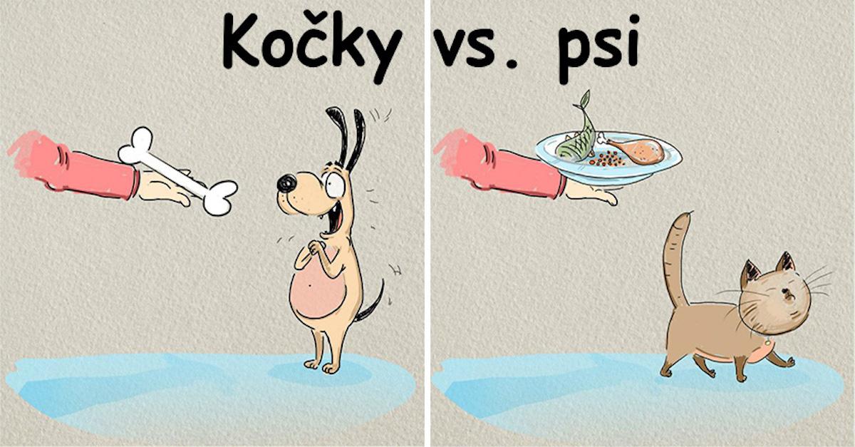 Kočky vs. psi: 6 rozdílů a nekonečný boj o prvenství