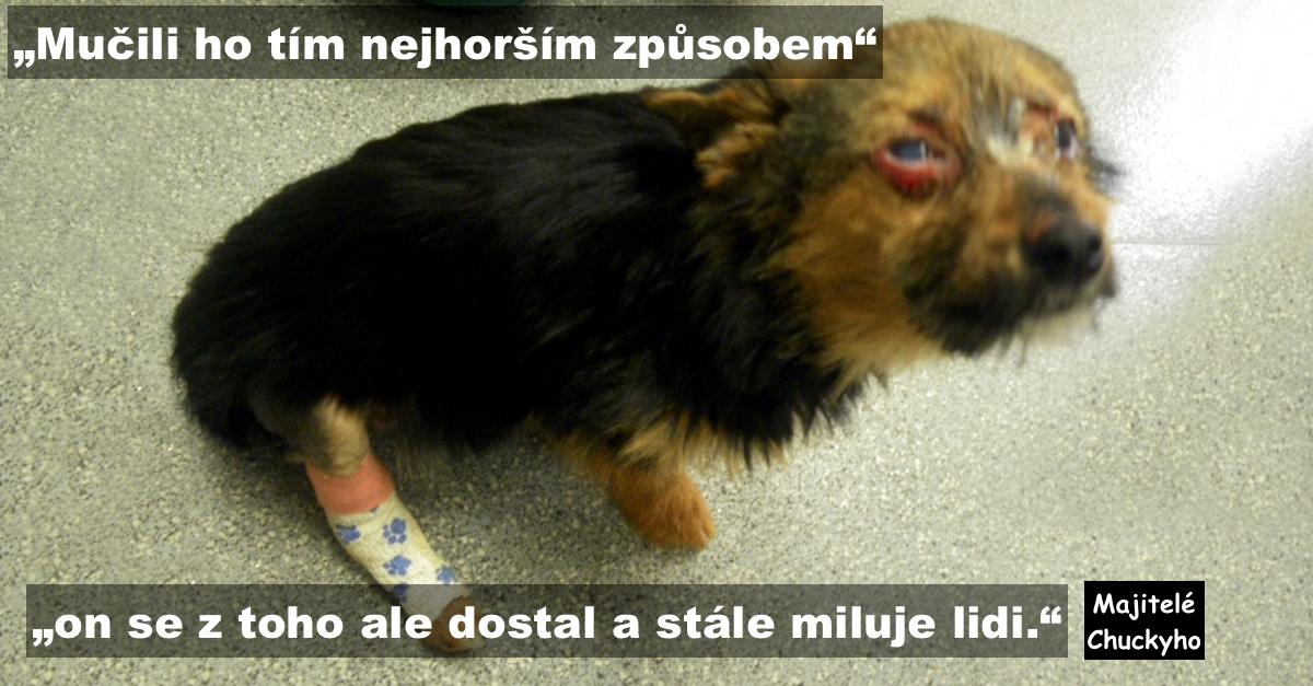 Puberťáci mučili psa, zlomili mu nohy a chtěli ho upálit, pes přežil a neztratil důvěru v lidi