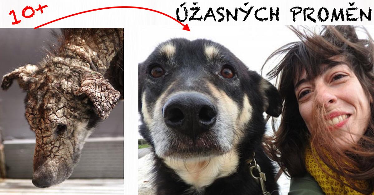 10+ PŘED A POTÉ: Neuvěřitelné proměny zachráněných psů