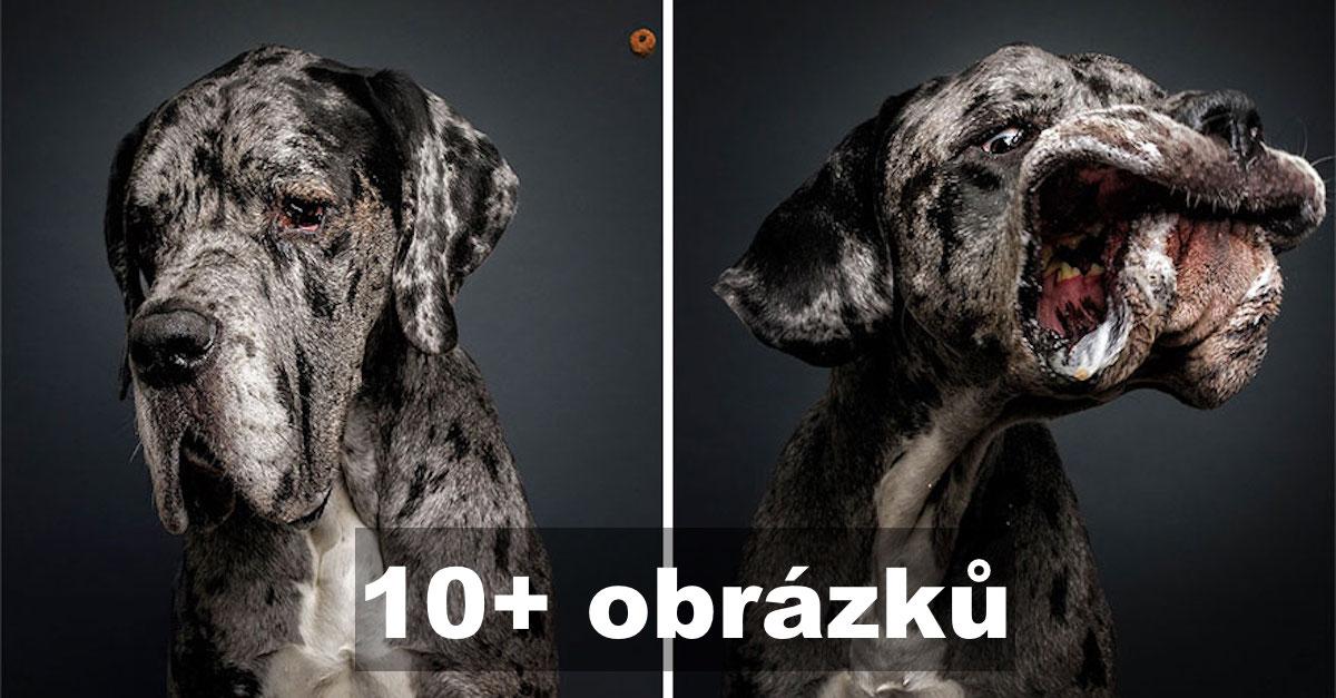 Úžasné výrazy psů, kteří se snaží chytit pamlsky (10+ obrázků)