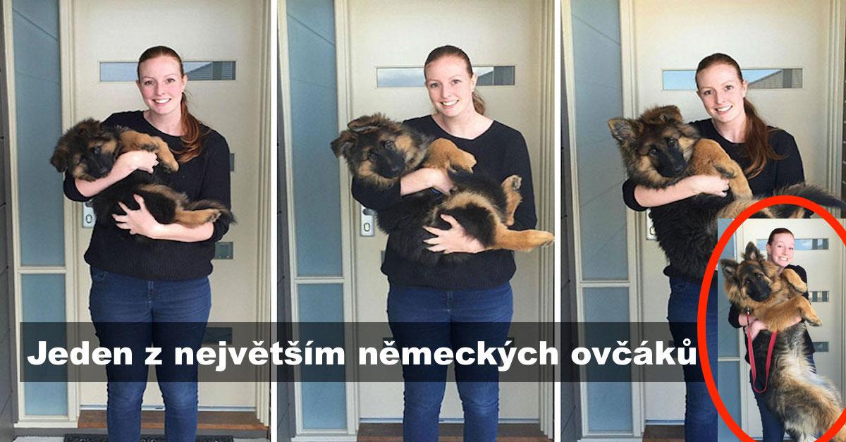 Pár zdokumentoval, jak rychle vyrostlo jejich štěně pouze během 8 měsíců