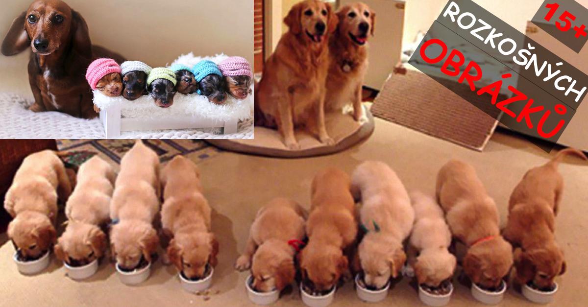 15+ hrdých maminek s jejich štěňaty ❤
