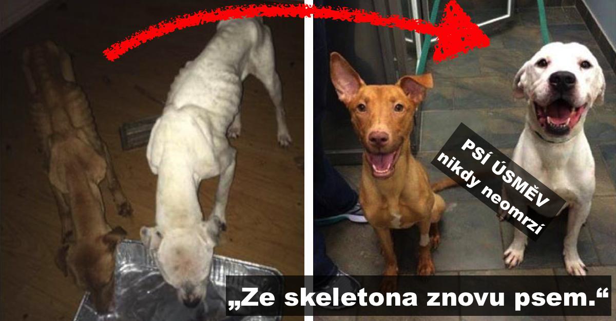 """""""Z kostlivce znovu psem."""" Úžasná přeměna dvou psů, které Ema našla před policejní stanicí"""