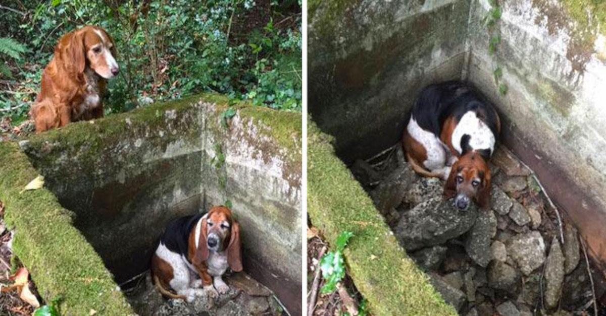 Pes strávil u svého kamaráda v pasti přes TÝDEN, až poté dorazila pomoc