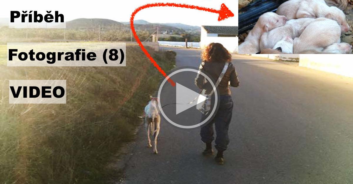 Fenka se zlomenou nohou vedla veterináře 3 kilometry za svými štěňaty