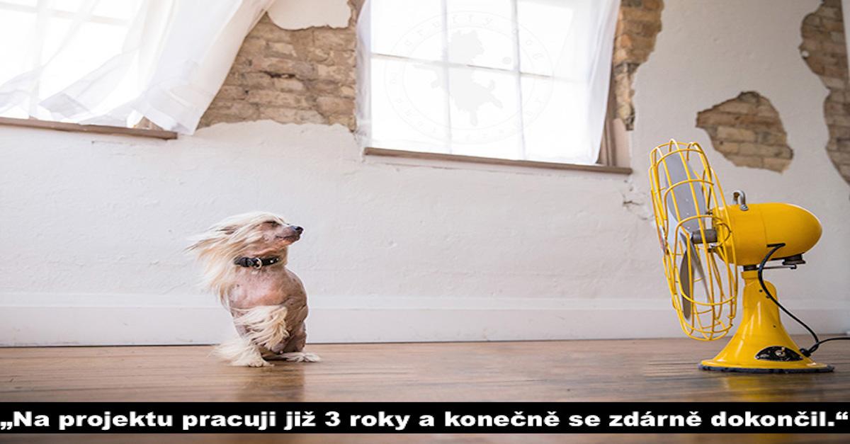 """""""Psi vs. féni"""" (10+ obrázků)"""