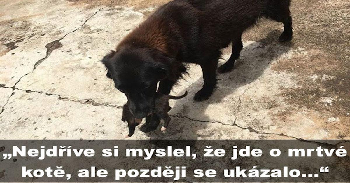 Uviděli psa, jak se přehrabuje v odpadcích, ale ukázalo se, že se někomu snaží zachránit život...
