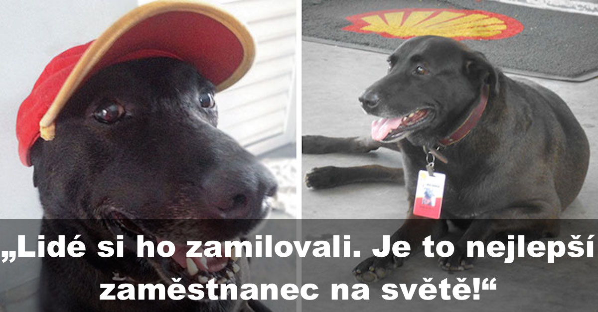 Pes, kterého majitel opustil na čerpací stanici, dostal práci na plný úvazek
