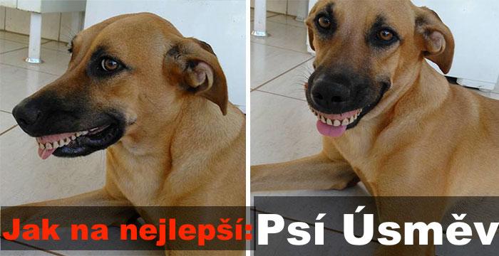 Majitel málem zemřel smíchy, když zjistil, jakým způsobem jeho pes získal svůj nový PSÍ ÚSMĚV