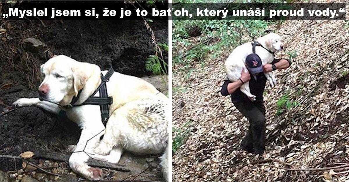 Slepého psa našli v horách po 8 dnech, poté co zmizel