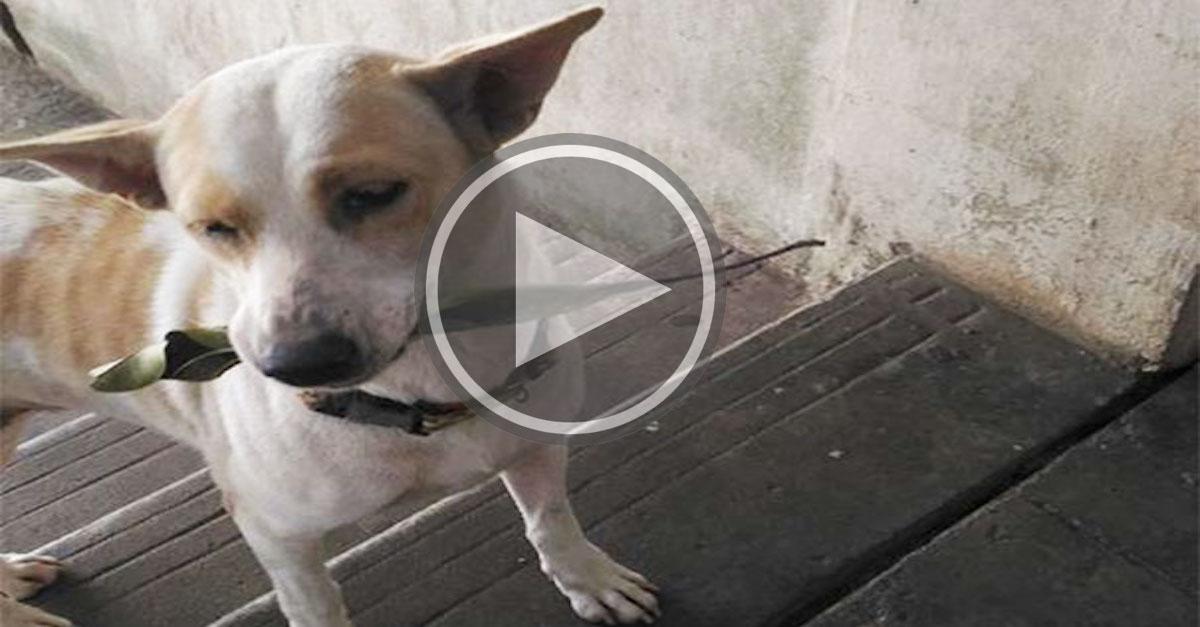 Tenhle opuštěný pes nepřestává nosit dárky ženě, která ho krmí