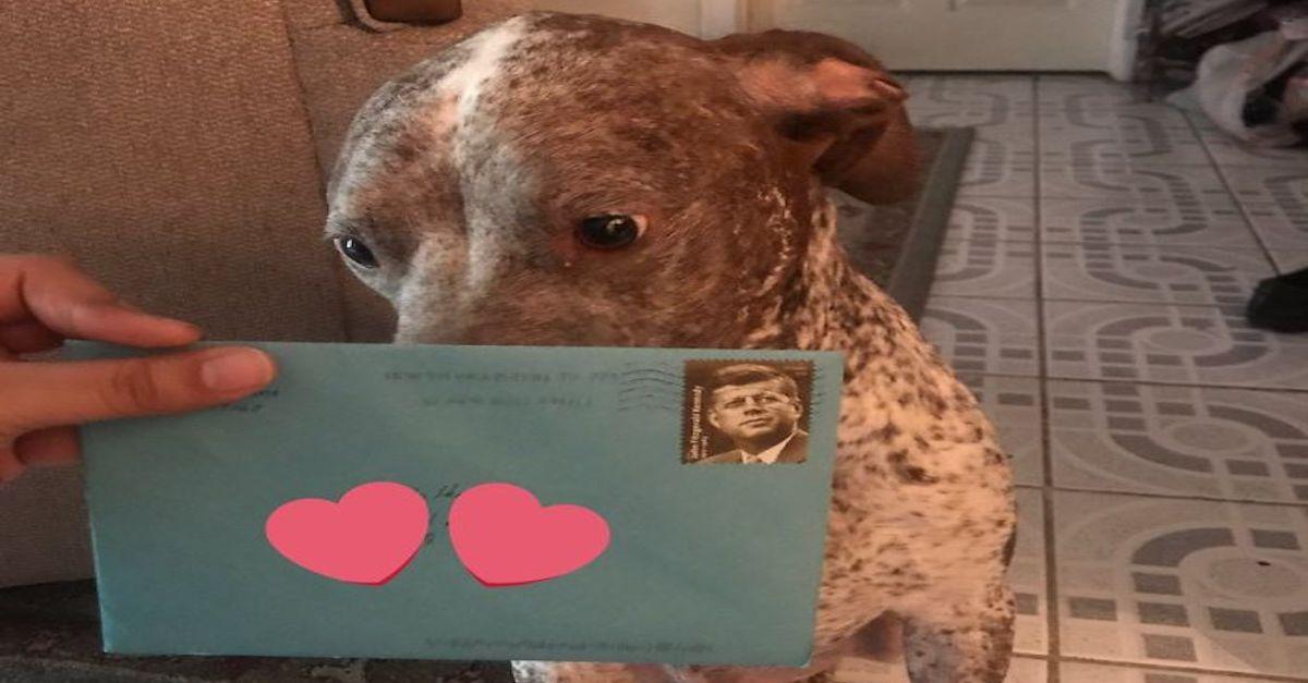 Exmanžel jejímu psovi stále každým rokem posílá přání k narozeninám a internet je chce vidět znovu spolu!
