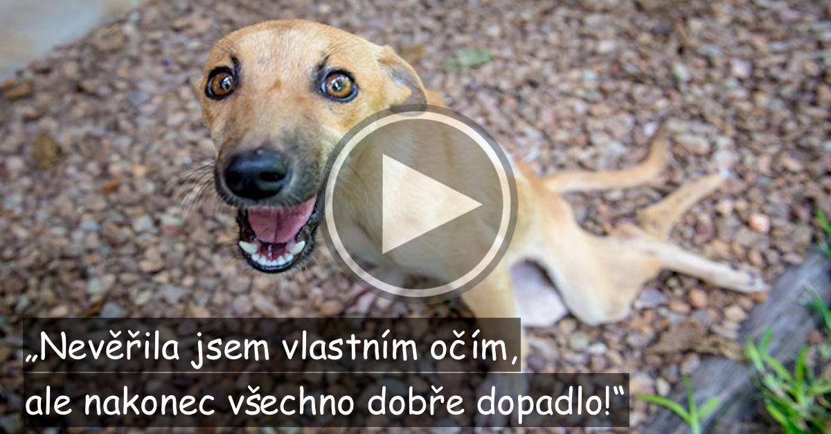 Pes se plazil více než 5 km, aby našel pomoc