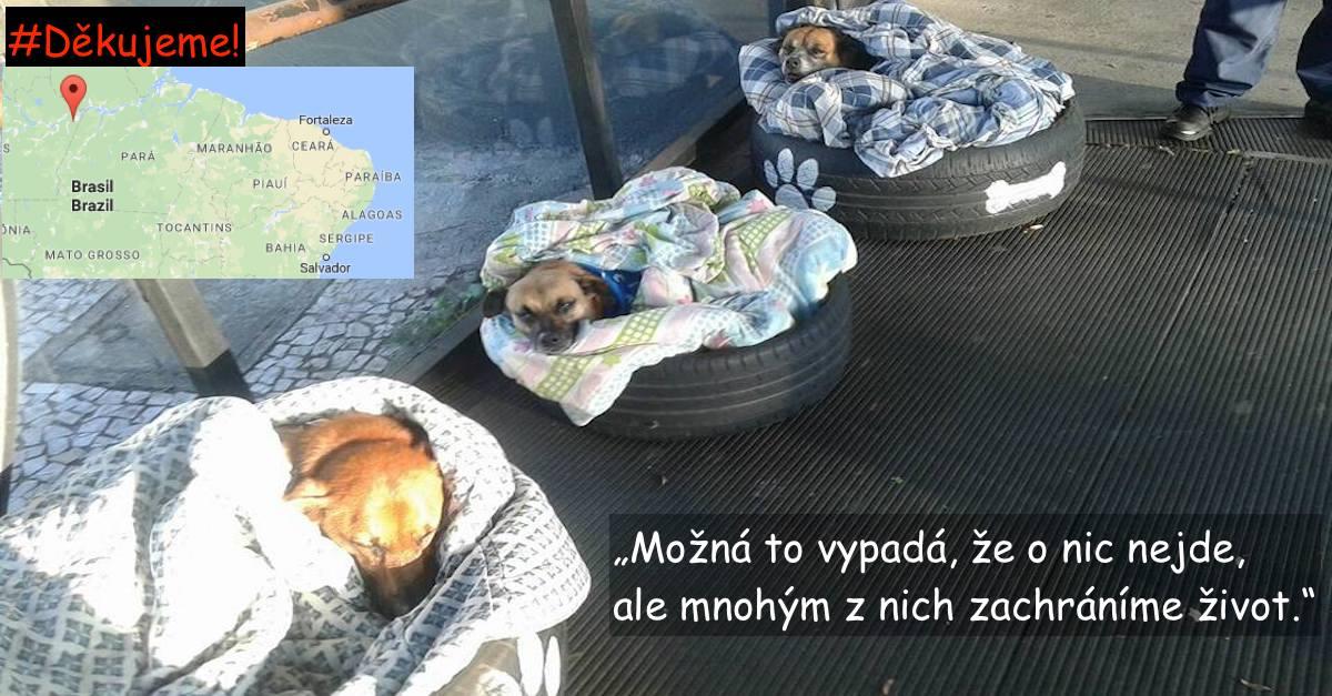 Vedení autobusového nádraží přišlo na skvělý nápad, jak pomoci zatoulaným psům