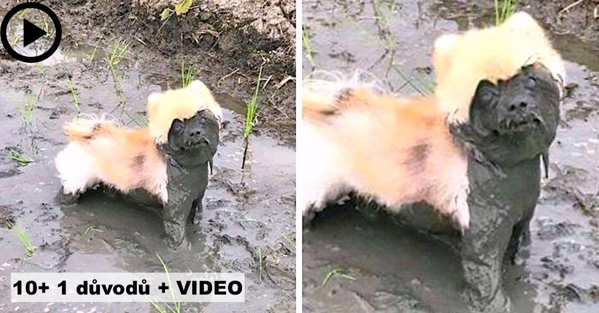 10+ 1 důvodů: Proč byste nikdy neměli nechat psa hrát si v bahně
