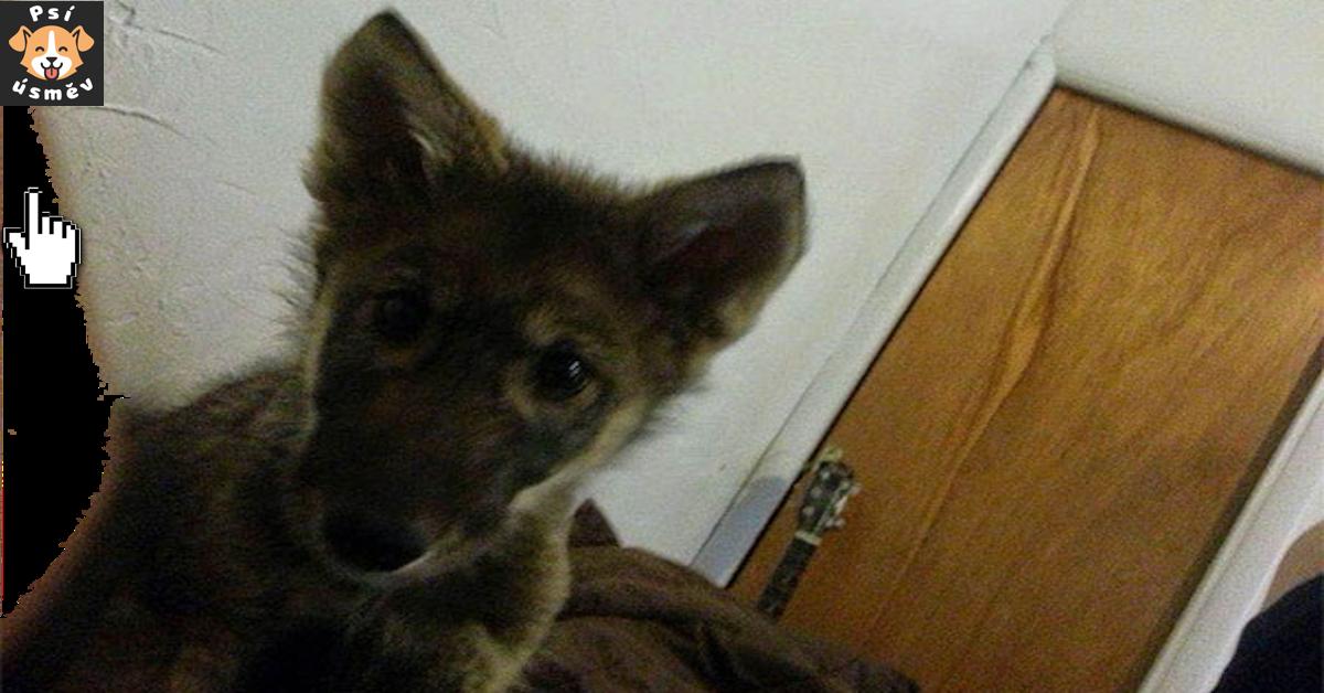 Muž přijal štěně od majitele, který ho už nechtěl, ale později se ukázalo, že se vlastně nejedná o štěně...