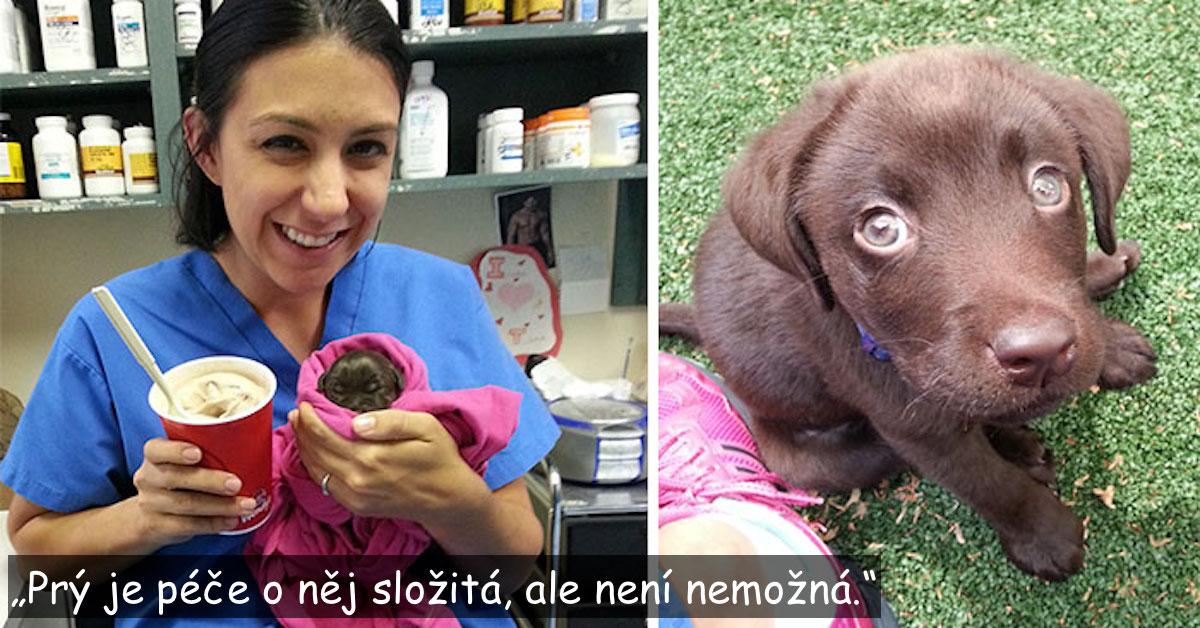 Veterinář zachránil čokoládového labradora, ne většího než šálek čaje, poté se ho nemohl vzdát