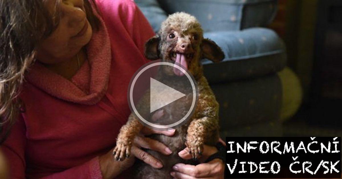 Fenka strávila celý život v množírně psů, nemohla udržet nadšení z normálního světa
