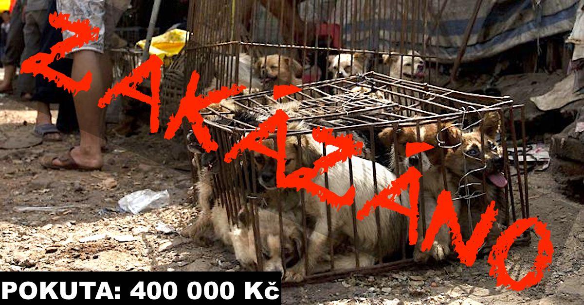 Festival psího masa v Číně konečně ZAKÁZÁN! Můžeme slavit?