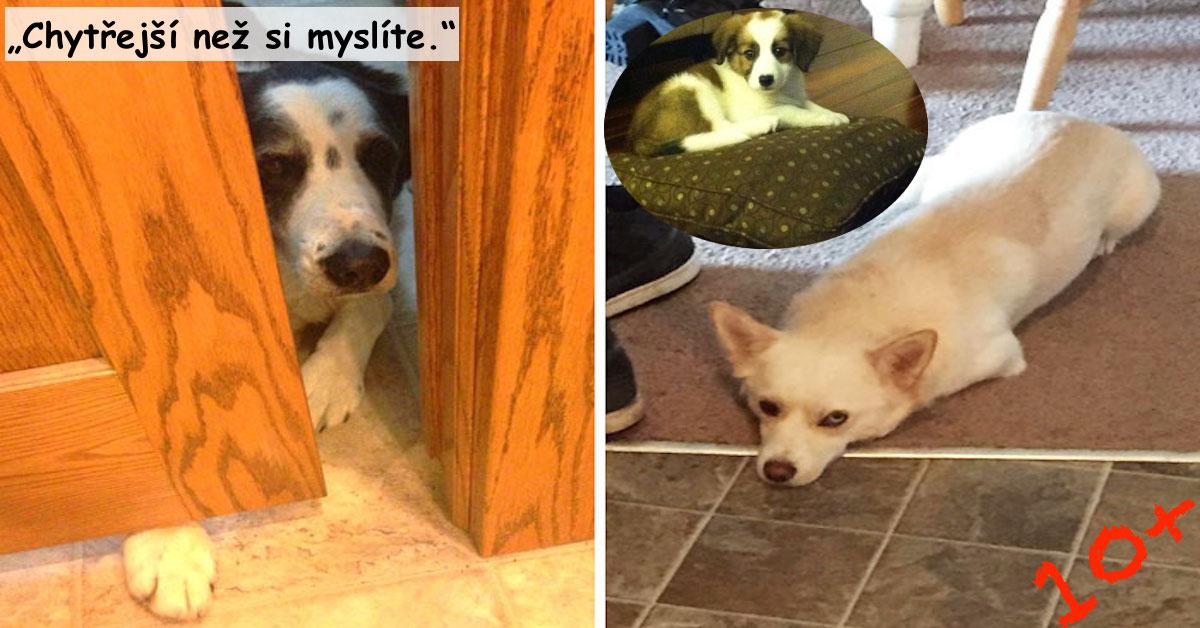 10+ situací, kdy pes přechytračil majitele, výsledky jsou úžasné