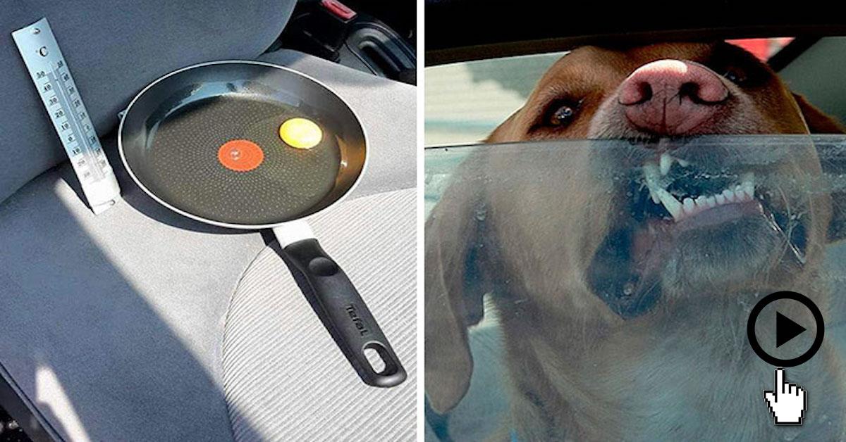 V horkém dni dal vajíčka do auta, aby upozornil, že pes v autě nesmí čekat ani pár minut