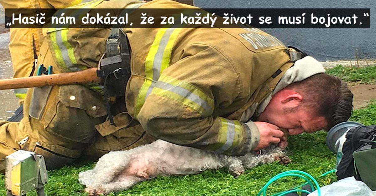 Hasič zachránil psa z hořícího domu, nechtěl ho nechat zemřít, použil dýchání z úst do úst…