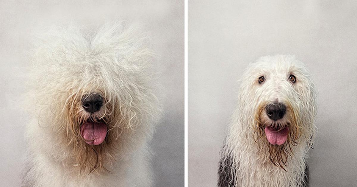 Suchý pes, mokrý pes: Fotograf vytváří nevšední fotoalbum