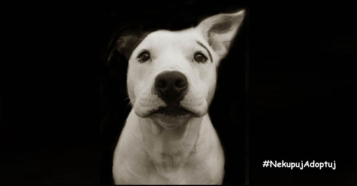 Dojemné obrázky psů z útulku