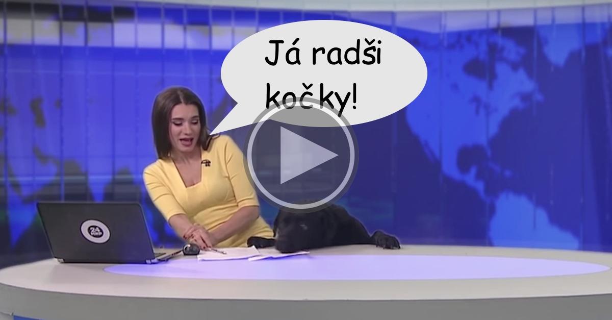"""Pes """"narušil"""" živé vysílání Tv zpravodajství"""