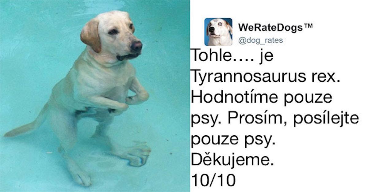 10 lidí, kteří selhali v hodnocení svého psa