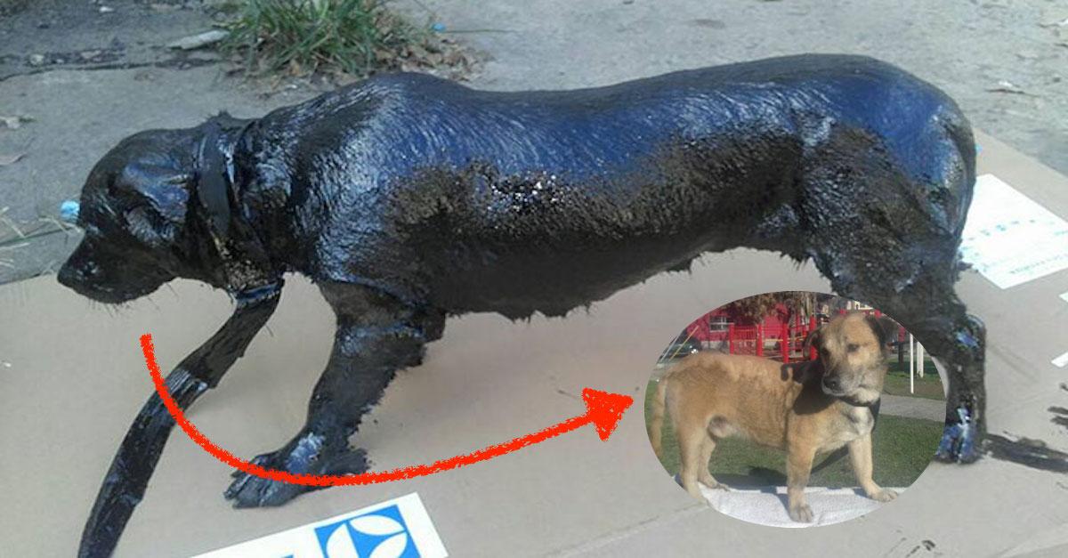 """Dva kluci zachránili psa pokrytého ropou, nyní """"vypadá jako nový"""""""