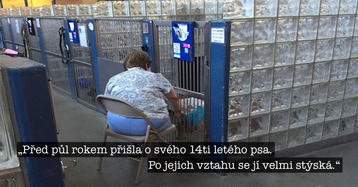 Žena čte starým psům v útulku, aby se necítili tak osamoceně