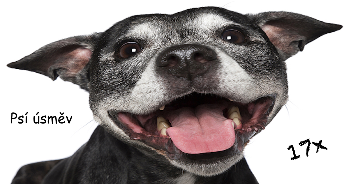 """""""Bláznivá psí dáma"""" fotí psí úsměv, aby se lidé také smáli"""