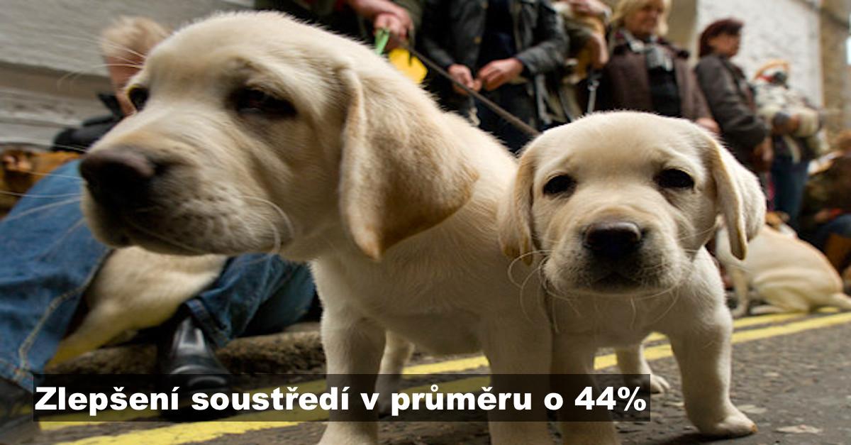 VÝZKUM: Chvíle se psem studentův výsledek zvýší až o 44%