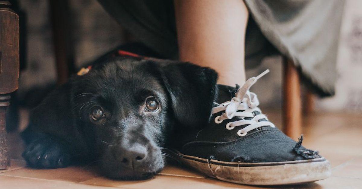 Fotograf psů roku už je známý! Podívejte se na nejlepší soutěžící