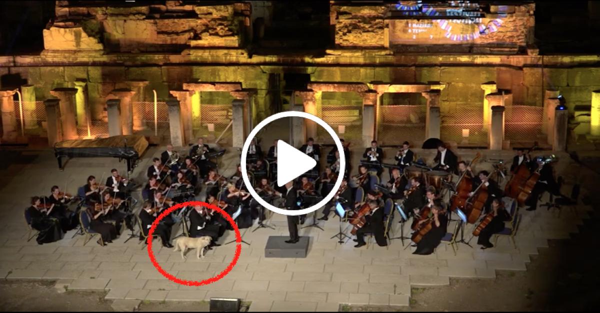 Pes narušil vystoupení orchestru tím nejkrásnějším způsobem, sklidil sérii aplausů