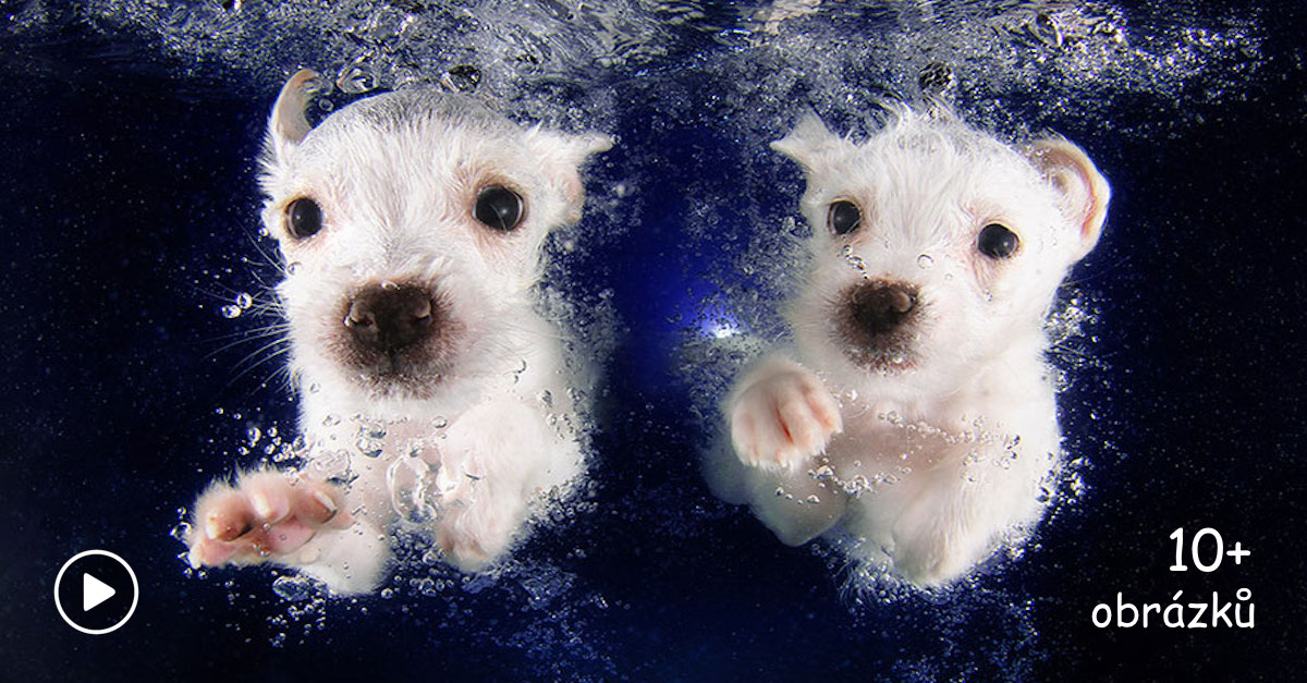 Když štěně miluje vodu ♡