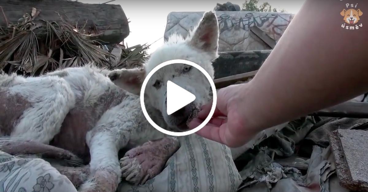 Pes žil na skládce, než anonym konečně zavolal pomoc