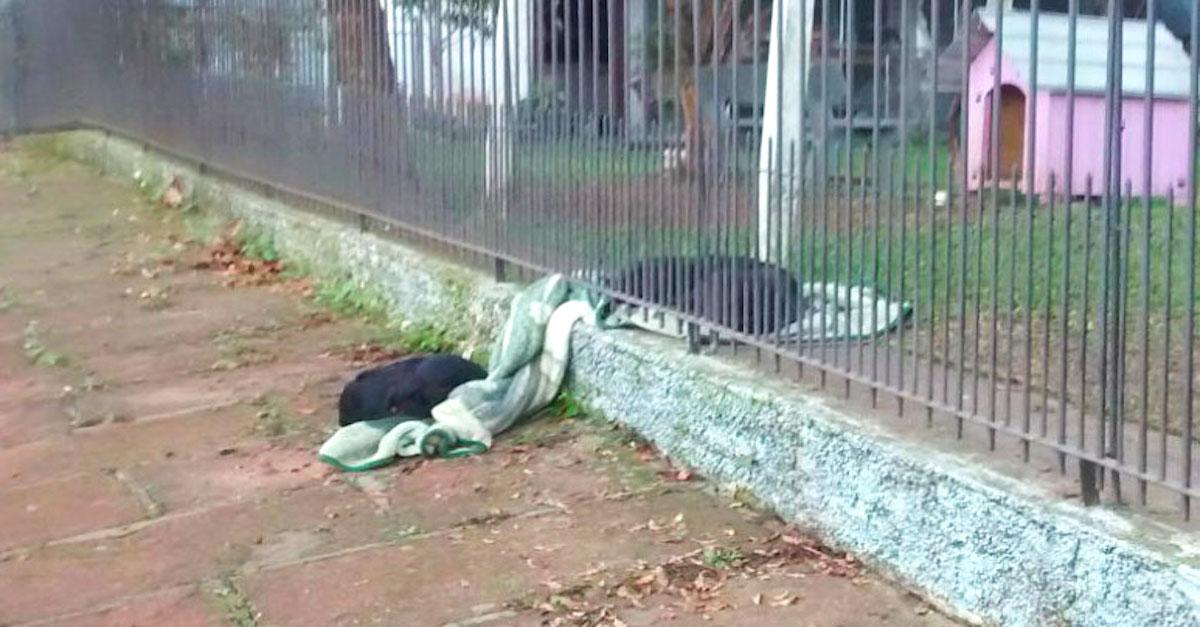 Nechápala, proč její nové štěně tahá deku za plot, poté uviděla tohle