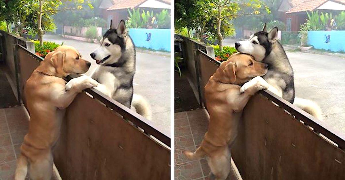 Tenhle pes se cítil osamoceně, a tak utekl, aby objal svého kamaráda