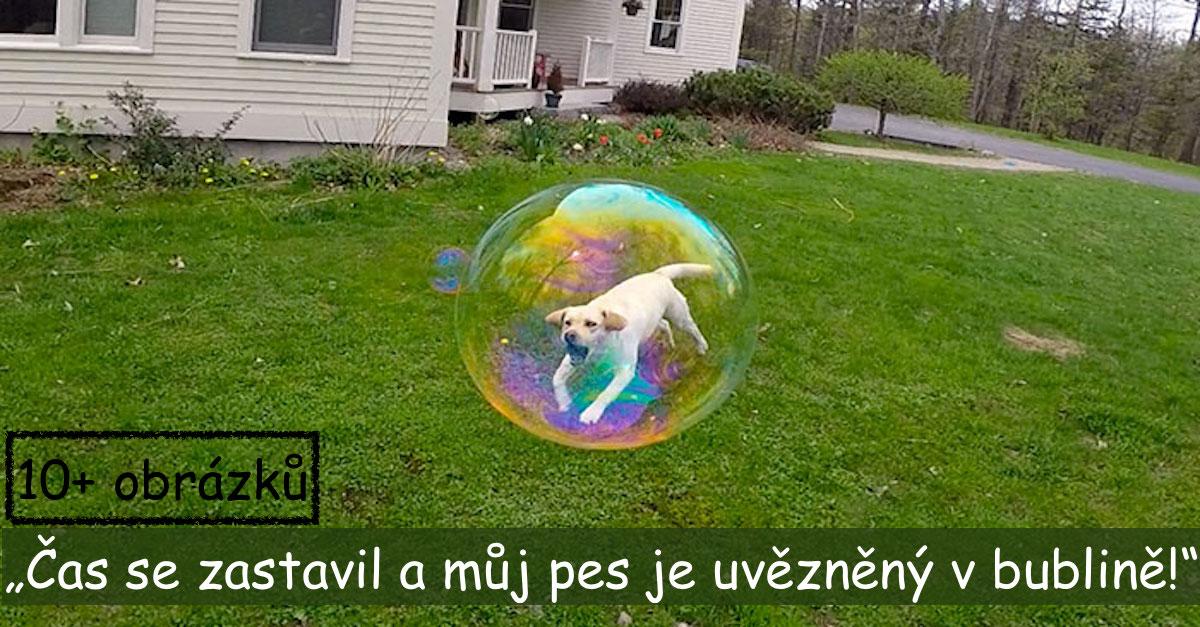 Dokonalé psí momentky [žádný Photoshop]