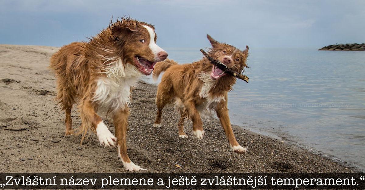 Psi, kteří objevují svět tím nejúžasnějším způsobem