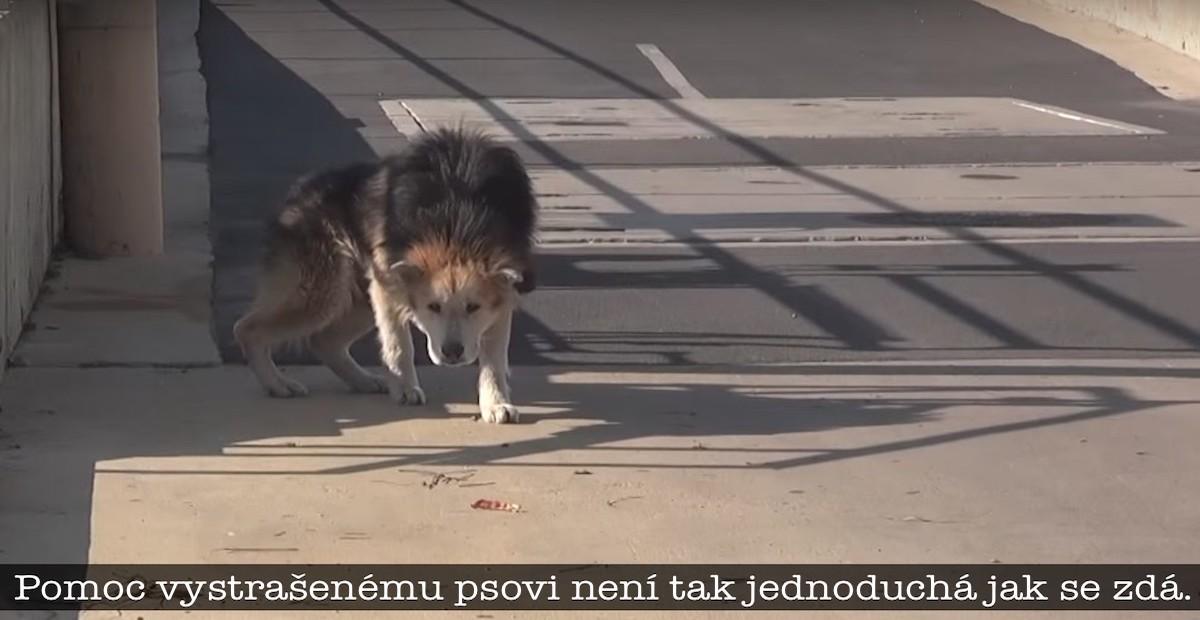 Záchrana starého opuštěného psa u vodárny