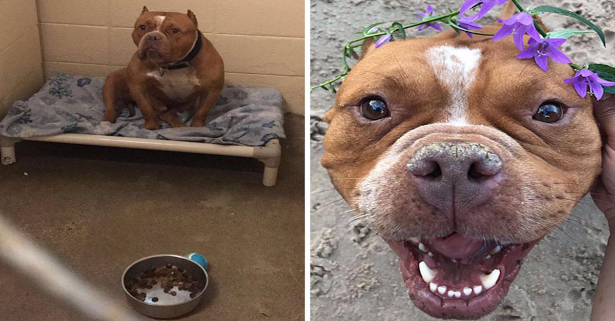 """""""Moje sestra adoptovala svého prvního psa a obrázky před a poté mě rozbrečely"""""""