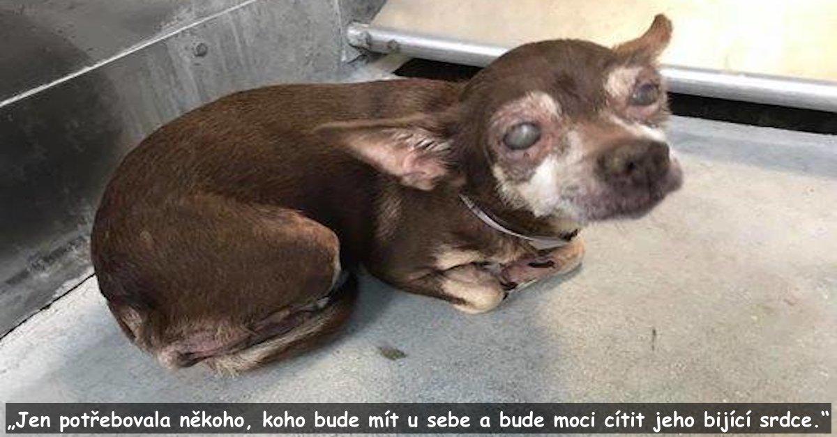 Slepý pes v útulku neudržel emoce, když přišla záchrana