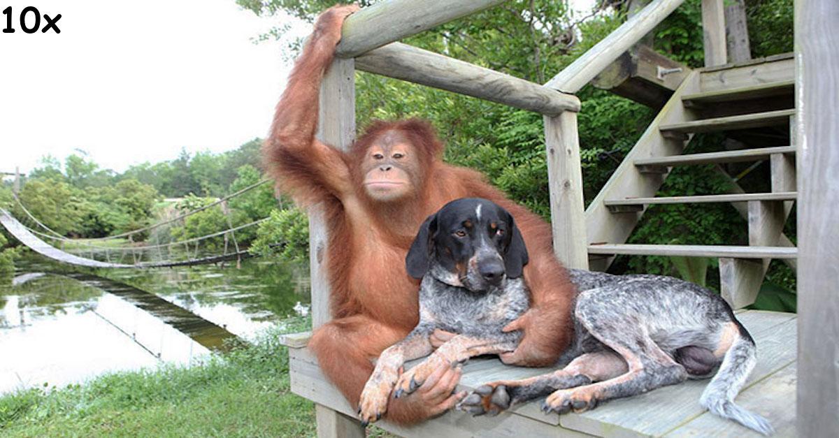 Neobvyklá přátelství, která zahřejí u srdce