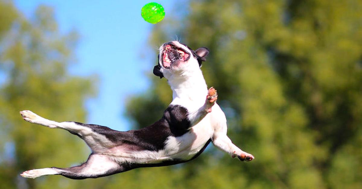 Vyfotila jsem svého psa, abych Vám dokázala, že je to akrobat