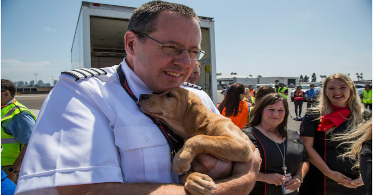 Letecká společnost plnila letadla domácími mazlíčky, kteří přišli o domov