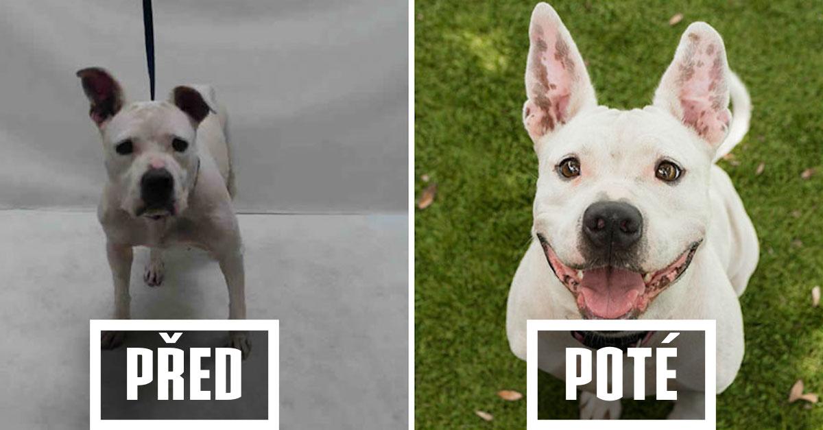 9+ obrázků PŘED a POTÉ, které dokazují, že psi v útulku potřebují dobré fotografy