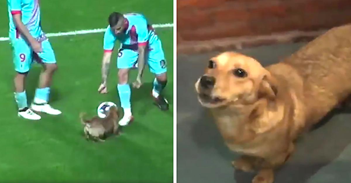 Zatoulaný pes narušil fotbalový zápas, ale u fanoušků zvítězil!